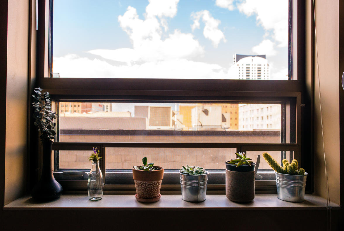 A variety of plants on a windowsill in a 318 Commons apartment